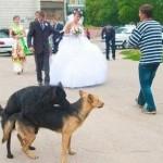 poze-haioase-de-nunta-2